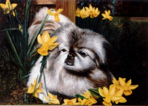 Dog In Daffodils