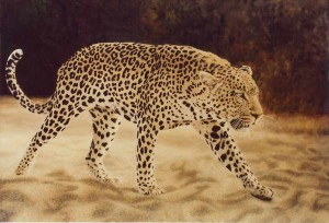 Sand Leopard
